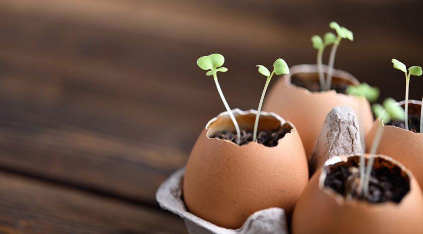 Best practices need fertile ground to grow in